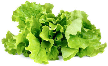 Emsa Click & Grow Substratkapsels Kopfsalat