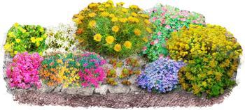BCM Beetpflanze Bunter Steingarten, (Set), 12 Pflanzen bunt Beetpflanzen Garten Balkon