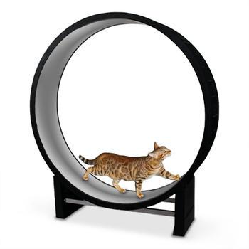 CanadianCat Katzenlaufrad Cat in Motion hellgrau