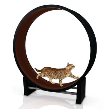 CanadianCat Company Katzenlaufrad Cat in Motion kastanienbraun