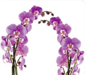 Wenko Multi-Platte Orchideenblüte