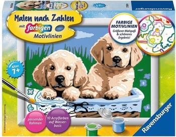 Ravensburger Malen nach Zahlen Süße Hundewelpen