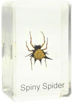 omegon-spiny-spider