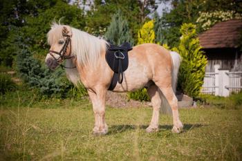 Kerbl Sattel Set Pony Economy