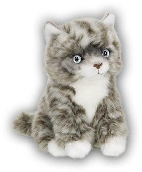 IBTT Anna Club American Shorthair Katze 28179014
