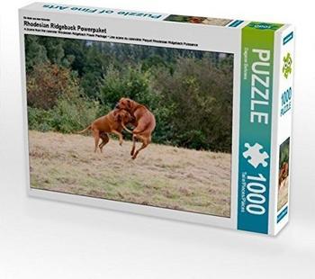 Calvendo Rhodesian Ridgeback Hündinnen 1000 Teile Puzzle quer Calvendo Tiere)