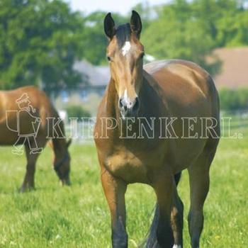 Kiepenkerl DSV Country-Horse 2120 Balance 10 kg