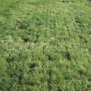 kiepenkerl-dsv-country-horse-2118-nachsaat-pferdegreen-10-kg
