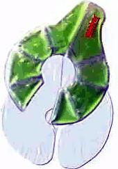 kaweco-mamivac-thermopack-brustkompresse-1-stueck