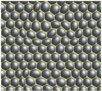Livingwalls Harmony in motion by Mac Stopa grau grün schwarz 10,05mx0,53m (327201)