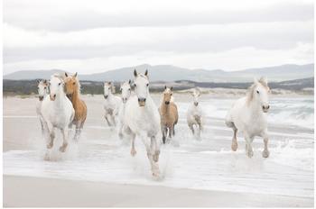 Komar White Horses 254 x 368 cm (8-986)