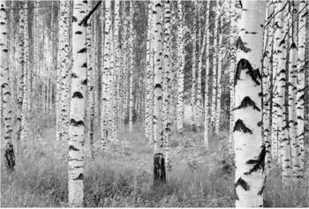 Komar Woods (XXL4-023)