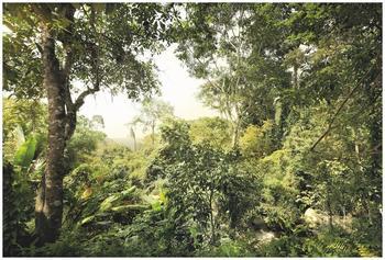 Komar Dschungel (XXL4-024)