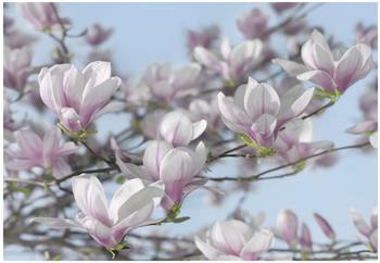 Komar Magnolia 368 x 254 cm (8-738)