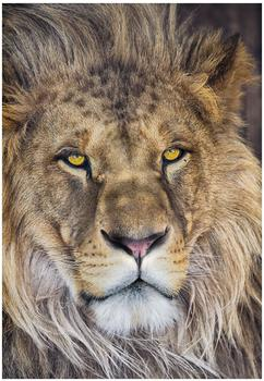 Komar Lion 127 x 184 cm (1-619)
