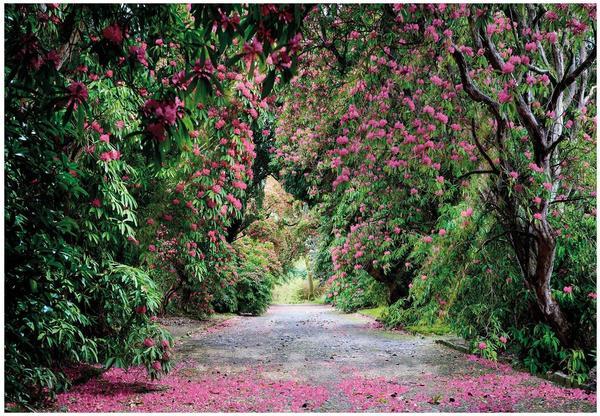 Komar Wicklow Park 254 x 368 cm (8-985)
