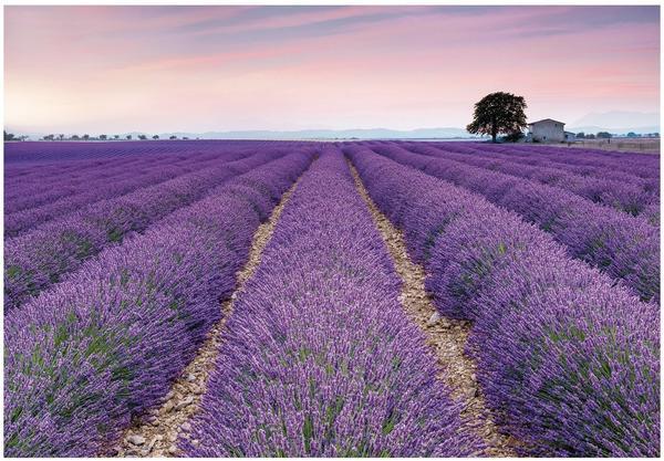 Komar Provence ()