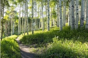 papermoon-birch-hiking-trail-350x260-cm