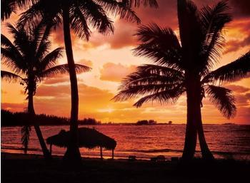 PaperMoon Palm Beach at Duselbstklebend 350x260 cm