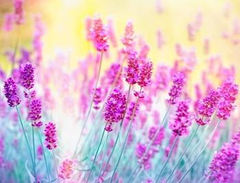 PaperMoon Lavender Flower 350x260 cm
