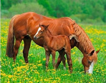 PaperMoon Horses 250 x 180 cm