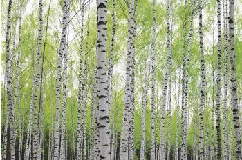 PaperMoon Birch Forest 250 x 180 cm