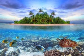 PaperMoon Marine Life Maldives 250 x 180 cm
