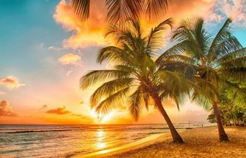 PaperMoon Barbados Palm Beach 350x260 cm