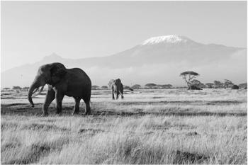 Apalis Elefanten vor dem Kilimanjaro in Kenya II 3,2 x 4,8m (94610-5)