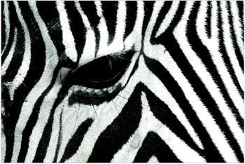 Apalis Zebra Crossing 2,9 x 4,32m (94873-4)