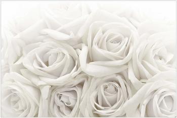Apalis Weiße Rosen 2,9 x 4,32m (94784-4)