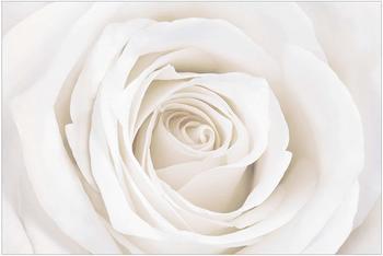 Apalis Pretty White Rose 2,9 x 4,32m (94773-4)