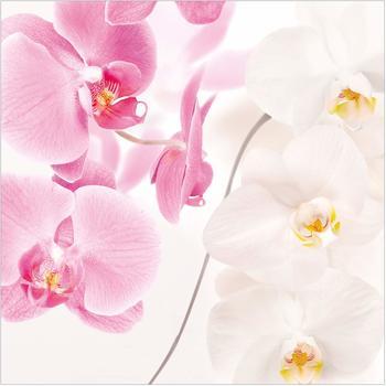 Apalis Delicate Orchids 3,36 x 3,36m (95294-4)