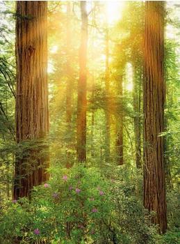 komar-redwood-184-x-248-cm