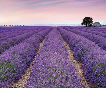 Komar Provence300 x 250 cm