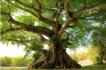 papermoon-peaceful-tree-400-x-260-cm
