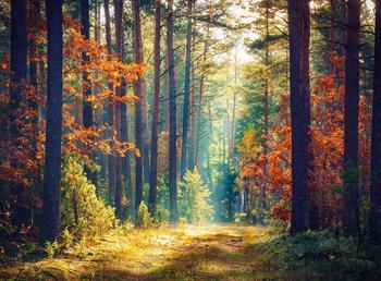 papermoon-autumn-forest-sun-rays-400-x-260-cm