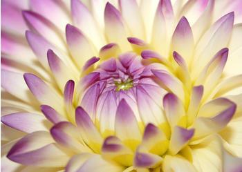 papermoon-macro-pink-flower-400-x-260-cm