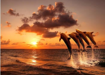 papermoon-sunset-jumping-dolphins-400-x-260-cm