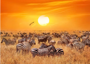 papermoon-african-antelopes-and-zebras-400-x-260-cm