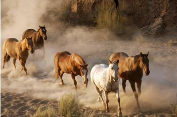 papermoon-wild-horses-400-x-260-cm