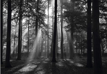 papermoon-forrest-morning-in-black-white-400-x-260-cm