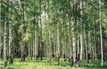papermoon-birch-forest-gruen-400-x-260-cm