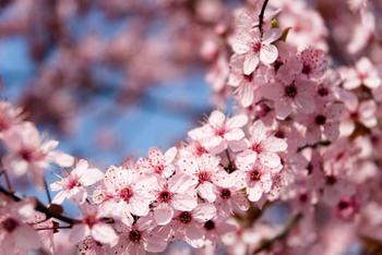 papermoon-springtime-flowers-400-x-260-cm