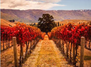 papermoon-autumn-vineyard-400-x-260-cm