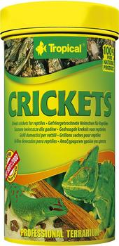 tropical-crickets-250ml