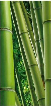 Apalis Raumteiler inkl. transparenter Halterung Bamboo Trees No. 2 grün