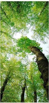 Apalis Raumteiler inkl. transparenter Halterung Bäume des Lebens grün